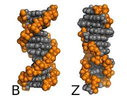 can-dna-test-prevent-disease-02