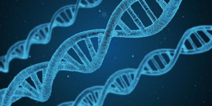 What Are Genes and How They Work